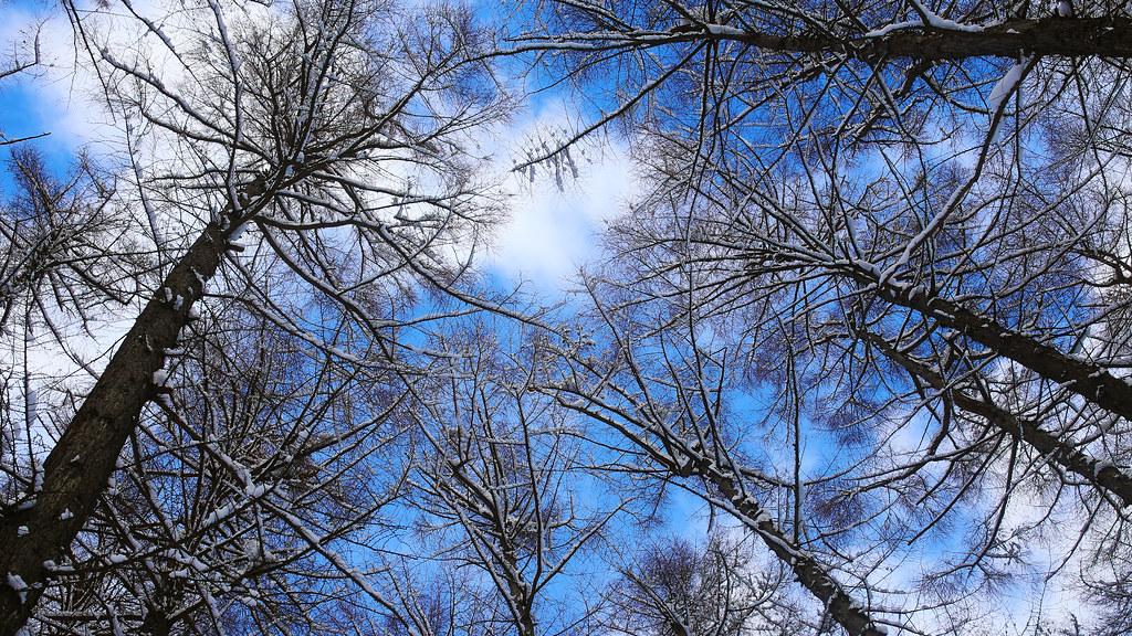 北海道神宮 札幌 Sapporo, Japan / Sigma 35mm / Canon 6D 望著天空什麼事都別想!躲在雪堆裡面躺著,天空好藍,下雪的地方放晴了!  Canon 6D Sigma 35mm F1.4 DG HSM Art IMG_6931_16x9 2017/01/25 Photo by Toomore