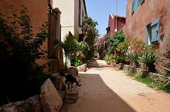 Senegal_Dakar6