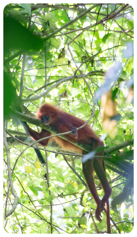 Borneo-20170412-_MG_7852