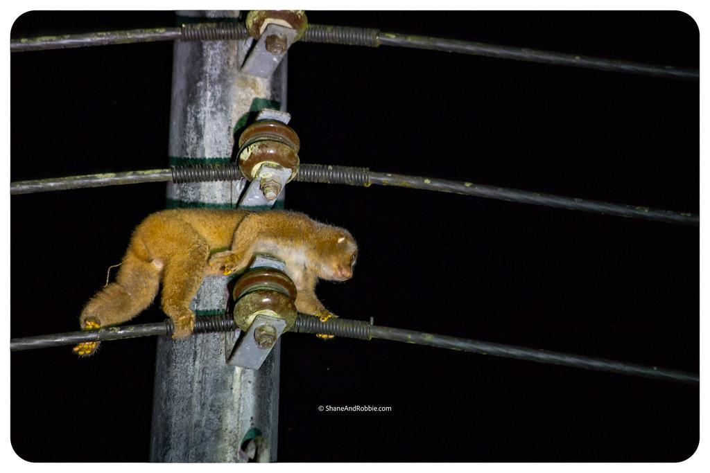 Borneo-20170411-_MG_7802