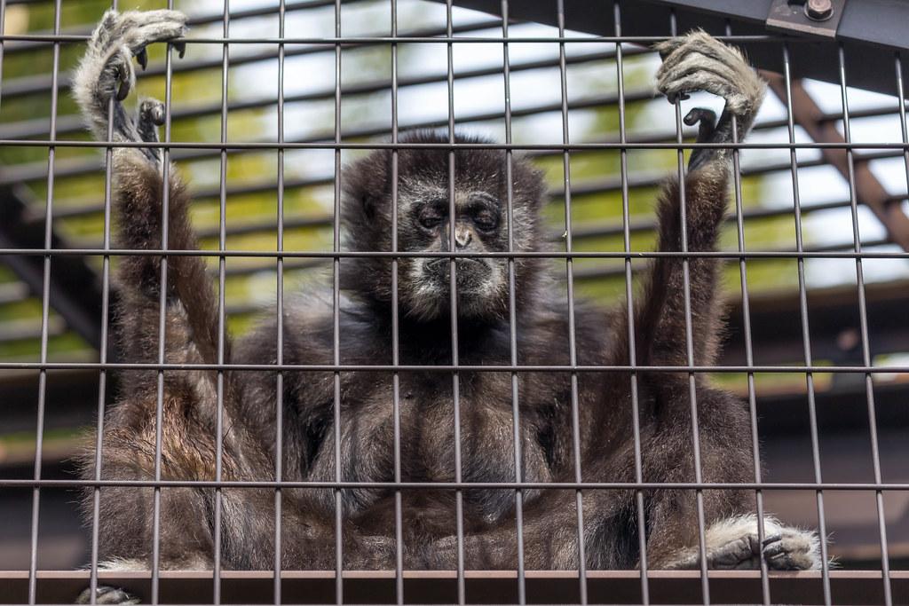 Cage kafig