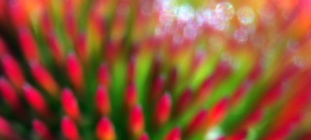 Flower Macro Bokeh Blur Red Green IMG_4338