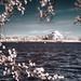 external image 13959393591_d752a53b61_s.jpg