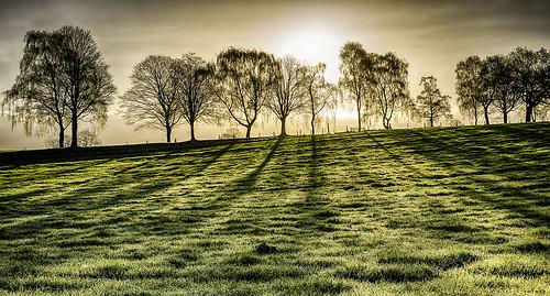 trees light england sunrise landscape spring nikon shadows shade april staffordshire contrejour gbr barlaston benbo nikonprofessional overtheexcellence nikkor2470f28 benbotripod threeshiresphotographers d800e nikond800e