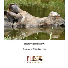 Happy #eartthday! #rhinos