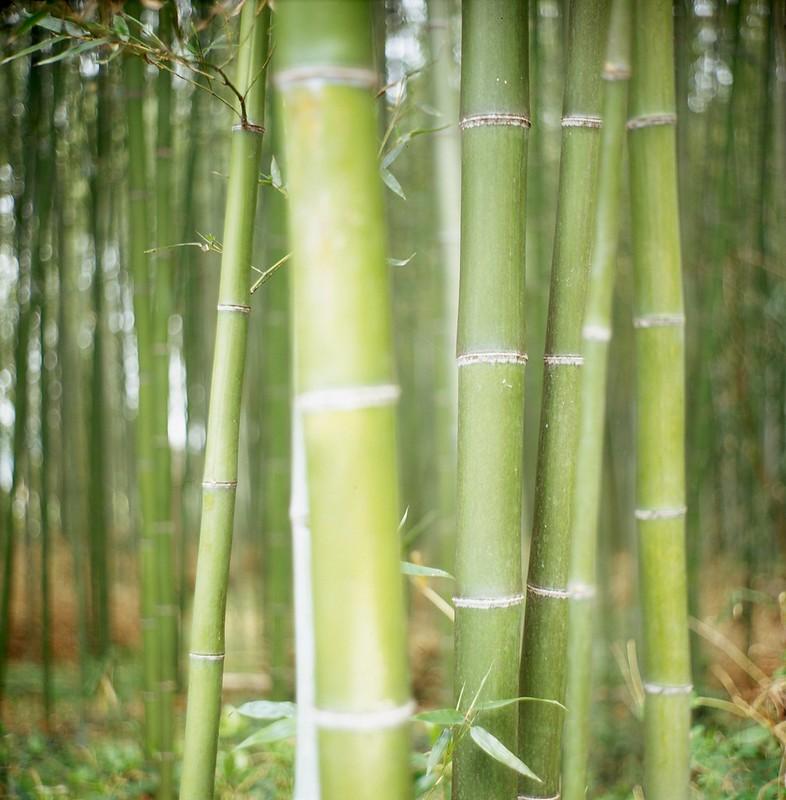 Zen Bamboo Forest