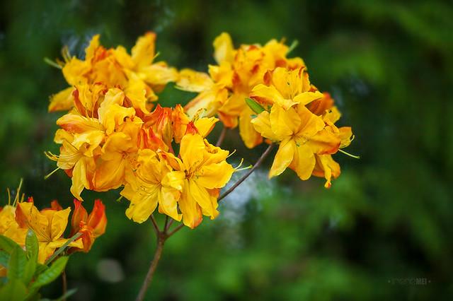 Харьковский ботанический сад весной