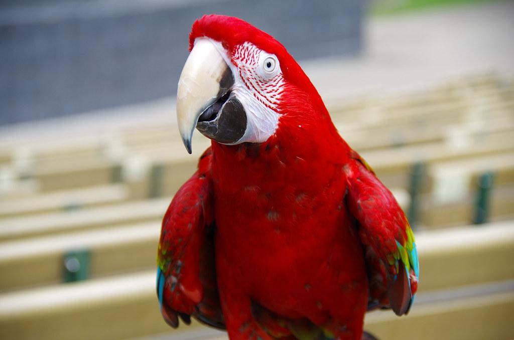 鸚鵡鳥聚 大安森林公園