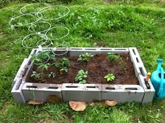 MY LIL' Garden