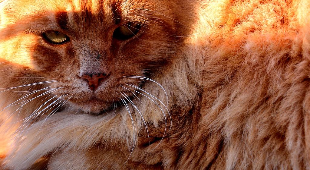 Close Cat