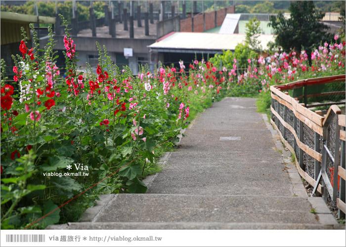 【彰化景點】克林姆莊園Cream Manor~小型動物園!戶外親子同遊好去處12