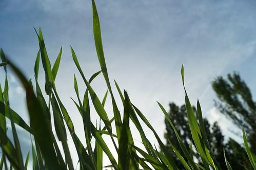 Verde Castellano.