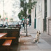 San Francisco pooch by Sarah Jane- Lovely Ember Photography