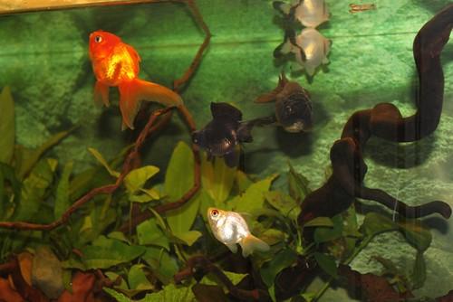 Een beplant aquarium