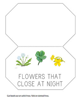 Flowers that close at night
