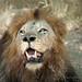 HRH King Leo by JuttaMK
