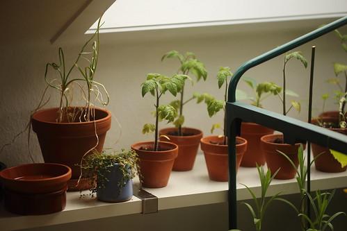 growing inside 2