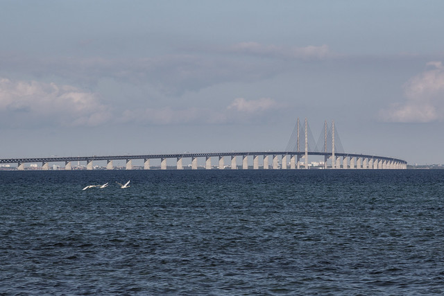Swans Flying Past Øresund Bridge