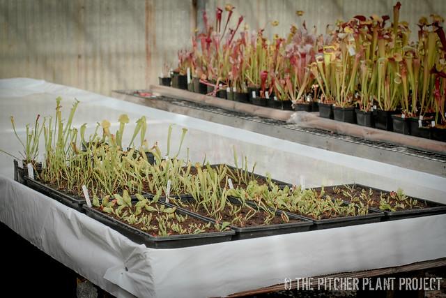AF Seedlings