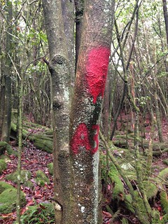 紅漆也來到原始森林。