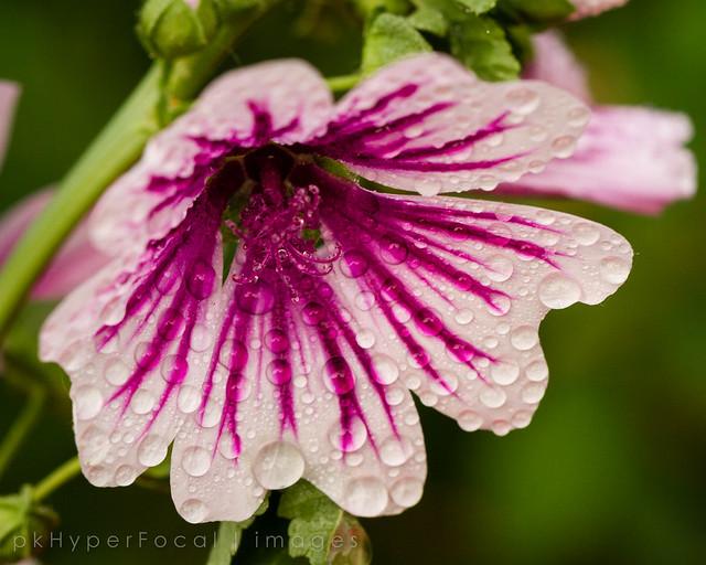 Flower in the Dew