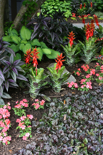 44_tropical_plantings_outside