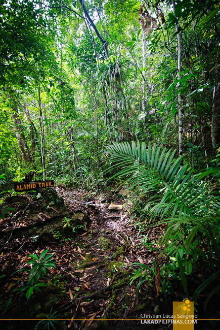 Alamid Trail at the Philippine Tarsier & Wildlife Sanctuary in Bohol