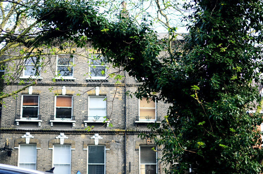 4 hampstead tall houses ivy trees