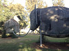 Botany Elephants
