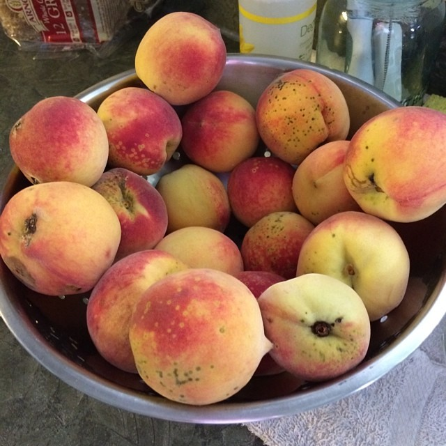 Just a few peaches from our peach tree. Greg picked about 20 lbs. today.