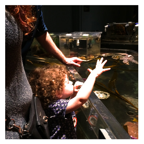Gates Explores Tide Pool at Academy of Sciences