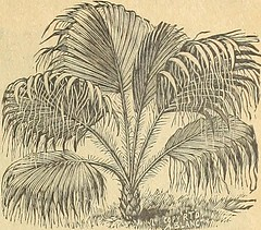 "Image from page 8 of ""Miss Ella V. Baines, the woman florist, Springfield, Ohio : 1900 spring catalogue"" (1900)"