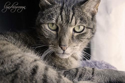 Happy Caturday, y´all!
