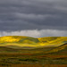 Carrizo Plain April 7 by Jeffrey Sullivan