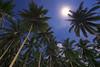 Pupuwe's CocoMoon