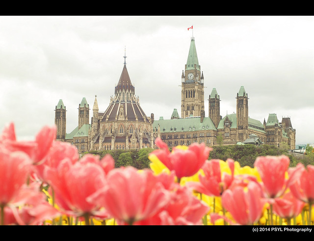 Tulips & Parliament Building