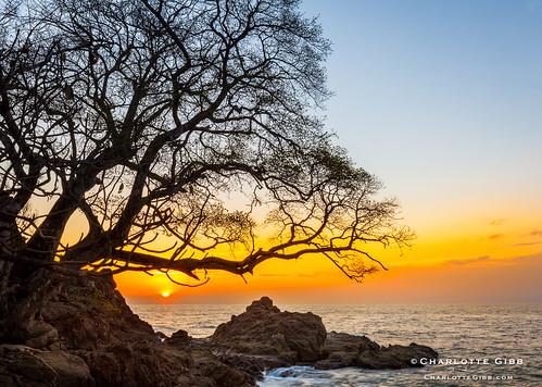 sun tree silhouette sunrise costarica rocky shore sunburst