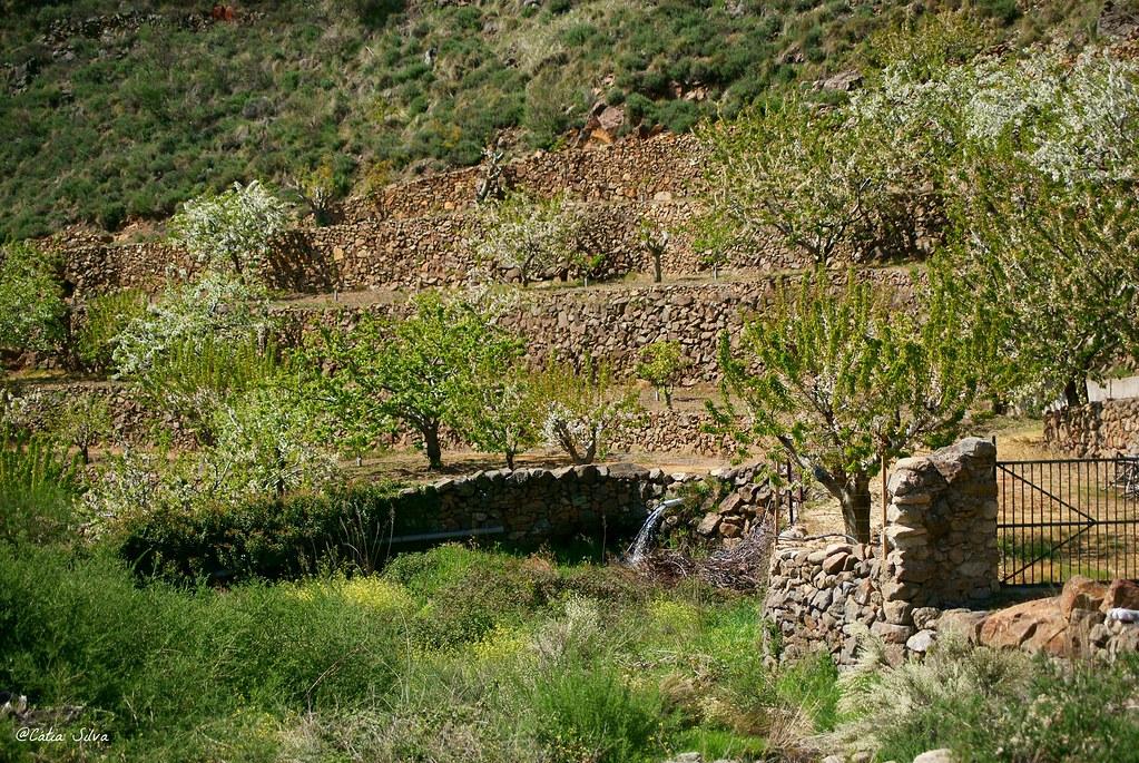 Extremadura-Valle del Jerte-Cerezo en Flor (16)