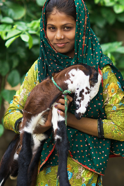 Beautiful Indian Girl Posing With Her Lamb In A Village Ne -1387