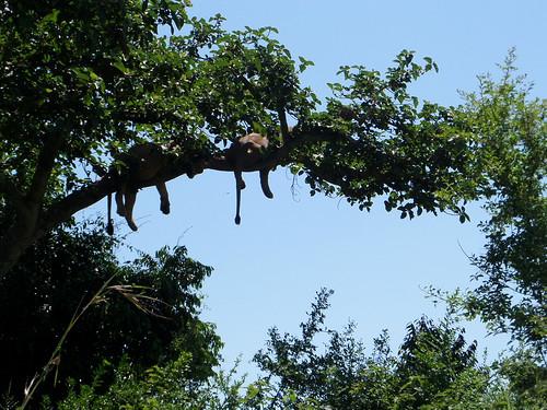 Nickerchen im Baum
