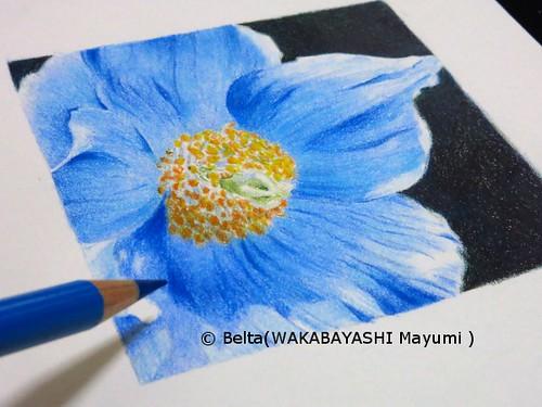 2014_05_17_blue_poppy_01_s