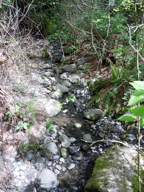 tributary to Lake Washington