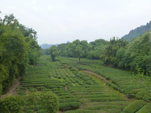 Fujian-Wuyi Shan-Village (13)