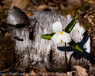 Trillium - Morris Island Conservation Area