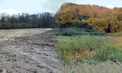 View of South Beach Prairie of a before/after of restoration.