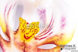 Orchidee | Projekt 365 | Tag 149