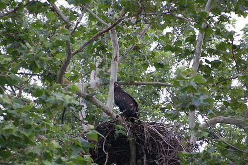 Sequoyah NWR Nest Camera & quot; Greatest Hits & quot; - Centro de Sutton