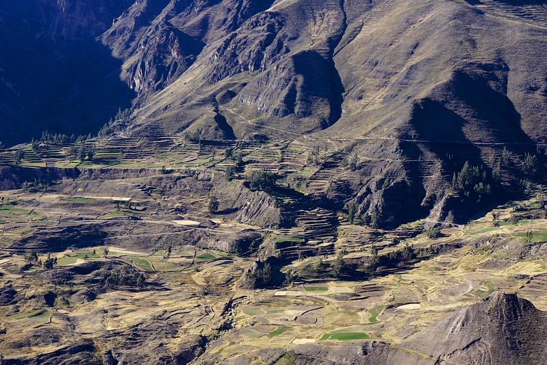 colca canyon 58