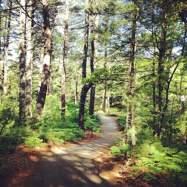 Nothing Ventured, Nothing Gained. I ran through several new areas this morning and loved what I felt and saw. #shirleyruns #newengland