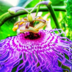 Nature rules, plant seeds... grow a beautiful world #passion #flower